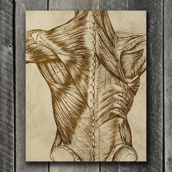 Vintage Back Anatomy Print