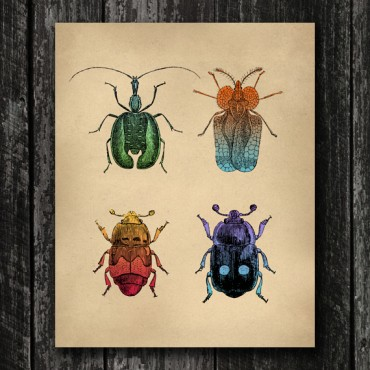 Insects Print - Vintage Beetle Engraving