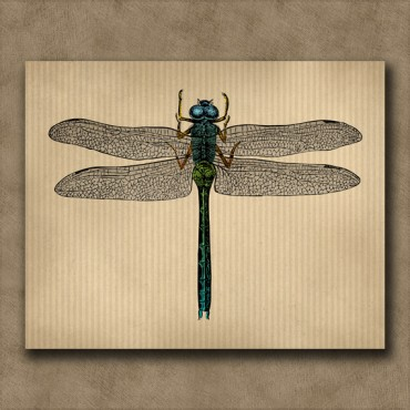 Dragonfly Print - Vintage Insect Engraving