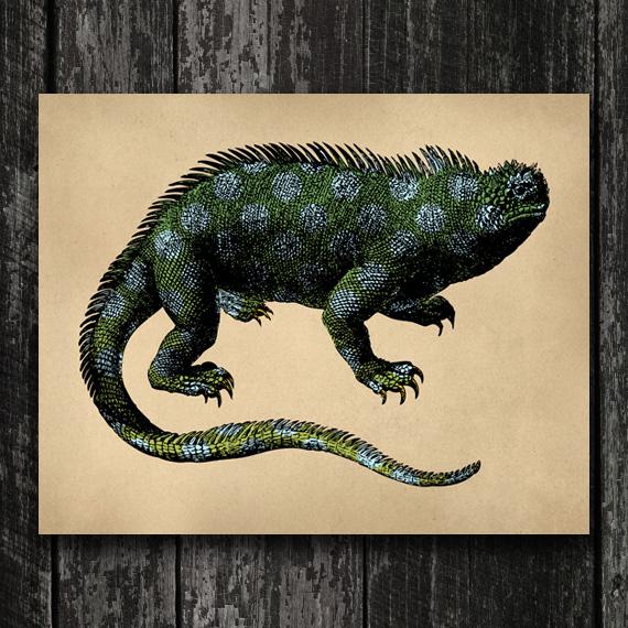 Iguana Print - Vintage Lizard Engraving