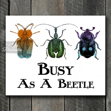 Beetles Print - Vintage Insect Engraving
