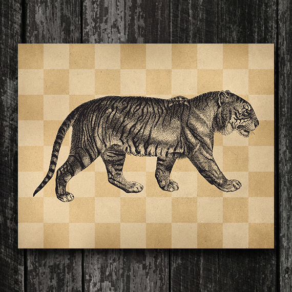 Tiger Print - Vintage Tiger Engraving