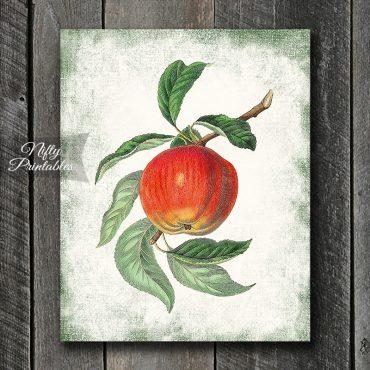 Botanical Apple Art Print