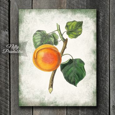 Botanical Peach Art Print
